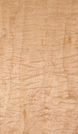 White Curly Maple